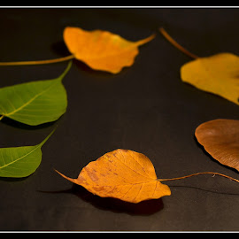 Cycle of Life by Prasanta Das - Nature Up Close Leaves & Grasses ( different, cycle, life, age, leaves )