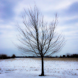 Winter by Donna Niemann - Instagram & Mobile iPhone ( # winter #clouds #sky #snowday #visitillinois #trees #iphonephotography )