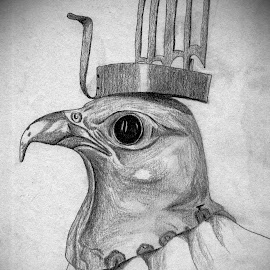 Egyptian Falcon by Cecilia Sterling - Drawing All Drawing (  )