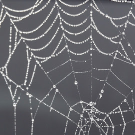 Foggy Morning Wet Web by Kevin Dietze - Nature Up Close Webs