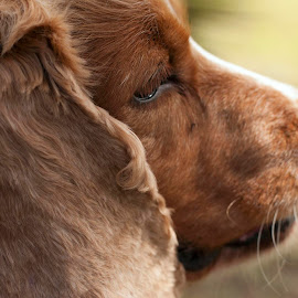 Menelau by Clarice Oliveira - Animals - Dogs Portraits ( #dog )