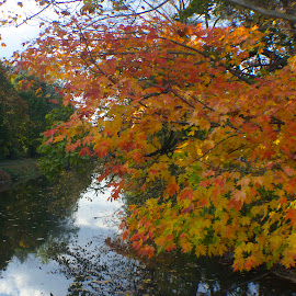Along the canal. by Jack Ferlise - Landscapes Travel ( fall, color, colorful, nature )