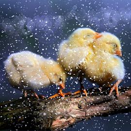 by DODY KUSUMA  - Animals Other