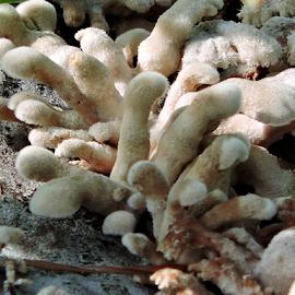 Shelf fungi by Yusop Sulaiman - Nature Up Close Mushrooms & Fungi