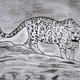 The Leopard by Varun Vijay - Drawing All Drawing ( animals, leopard )