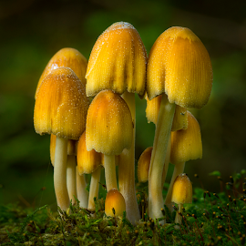 Fungi group by Peter Samuelsson - Nature Up Close Mushrooms & Fungi
