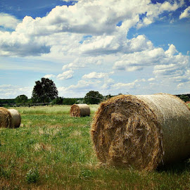 by Ksenija Glavak - Landscapes Prairies, Meadows & Fields (  )