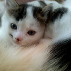 snuggle with mum by Lyz Amer - Animals - Cats Kittens ( kitten )