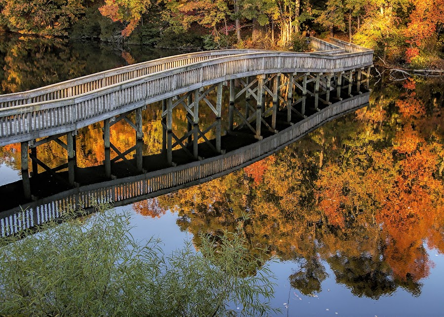 Still waters by Gene Myers - Buildings & Architecture Bridges & Suspended Structures (  )