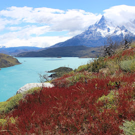Torres del Paine colors by Nadia Fedorova - Landscapes Travel ( chile, nature, patagonia, colors, travel, colorful, mood factory, vibrant, happiness, January, moods, emotions, inspiration )