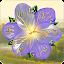 Flower Clock Live Wallpaper for Lollipop - Android 5.0