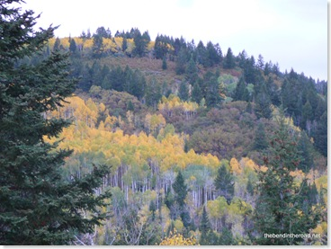 the tall Aspens here remind me of the art of Disney's Sleeping Beauty