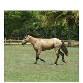 Wild Stallion by Kellie Jaros - Animals Horses