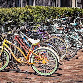 Racked by Carol Plummer - Transportation Bicycles