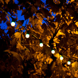 Festival Lights in Autumn by Danielle Falknor - Artistic Objects Other Objects ( evening lights, autumn, tree lights, festival lights, trees, night )