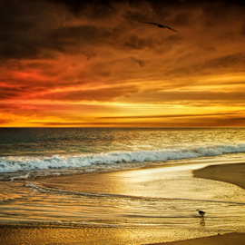 Beach Sunset WA by Loredana  Smith - Landscapes Sunsets & Sunrises ( australian, ocean, beauty, beach, landscape, coastline, romance, escape, coast, nature, idyllic, climate, sand, seashore, sea, leisure, relaxation, seascape, paradise, coastal, color, serene, australia, scene, culture, panoramic )