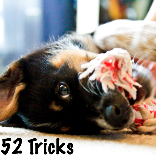 52 Dog Training Routines and Tricks
