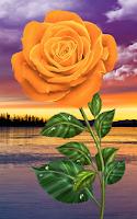 Screenshot of Rose. Magic Touch Flowers