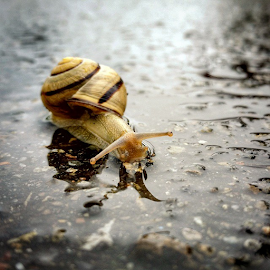 by Todd Reynolds - Instagram & Mobile Android ( snail, toddreynoldsphotography )