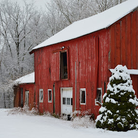 Red Barn by Carl Testo - Buildings & Architecture Decaying & Abandoned ( winter, barn, snow, northford )