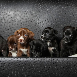 A box of Puppies  by Janice Carabine - Animals - Dogs Puppies ( puppies, pet, rescue, box, dog )