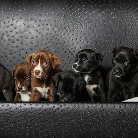 puppies oct_.jpg