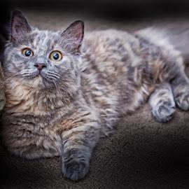 Cat by Lee Underwood - Animals - Cats Kittens ( kitten, cat, fluffy, little, cute )