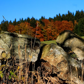 by Michal Valenta - Nature Up Close Rock & Stone