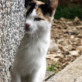 by Nikola Ikić - Animals - Cats Playing
