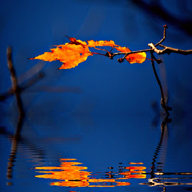 Splendid by DeDe PalmerWells - Nature Up Close Leaves & Grasses ( water, orange, reflection, blue, leaves )