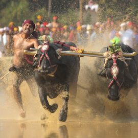 Speed by Ramya Raju - News & Events Entertainment ( kambla, buffallo race, sports, india, festival, karnataka,  )