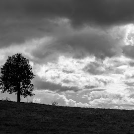Solitude by Catalin Ionut - Landscapes Weather ( clouds, hill, peisaj, solitude, singuratate, copac, alb, landscape, negru, nori, pom, tree, deal, cumulonimbus )