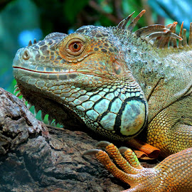 by Frinta Mpaxevanidou - Animals Reptiles