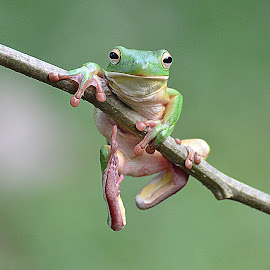 by May Wah - Animals Amphibians (  )