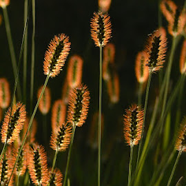 Glowing from within by Vaidehi Gunjal - Nature Up Close Leaves & Grasses ( grass, greatnature, light and shadow,  )