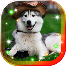 Husky Dogs live wallpaper