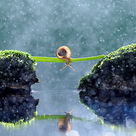Ho I am by Andri Priyadi - Animals Amphibians