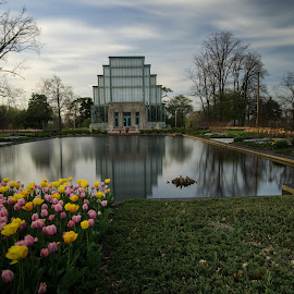 Jewel Box in Forest Park, Reflecting Pond by Allen Skinner - Buildings & Architecture Public & Historical ( jewel box in forest park )