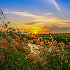 My Padi fields by Syahrul Nizam Abdullah - Landscapes Prairies, Meadows & Fields