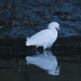 by Joe Shelton - Nature Up Close Water ( bird, fly, flight )