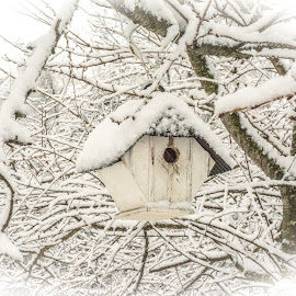 snowy home by Julie Reeves - Nature Up Close Hives & Nests ( snowy bird house, bird house in snow, bird house, snow scene, snowy )