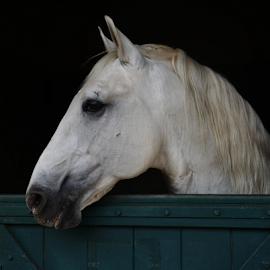 Bragança Paulista SP by Marcello Toldi - Animals Horses