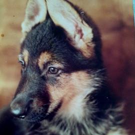 Sparkle by Lyz Amer - Animals - Dogs Portraits ( dog )
