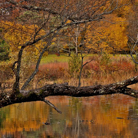 Autumn Reflection by Miren Etcheverry - Landscapes Forests ( orange, reflection, red, autumn, foliage, fall, trees, forest, leaves, pond, color, colorful, nature )