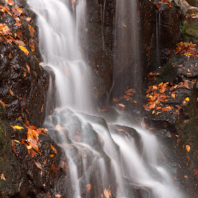 Avalon Falls by Nicolas Raymond - Landscapes Waterscapes ( stream, america, waterscape, rocky, waterfall, state, states, stone, rock, valley, landscape, leaves, usa, nature, autumn, maryland, long exposure, patapsco valley, avalon, grove, streaming, water, orange, patapsco, patapsco valley state park, united, park, cascades, scenic, falls, fall, scene, scenery,  )