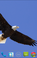 Screenshot of Bald Eagle Live Wallpaper