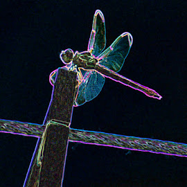 Neon Dragonfly by Carrie Cooper - Digital Art Animals