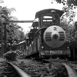 TOY TRAIN by Shobhan Sarkar - Transportation Trains