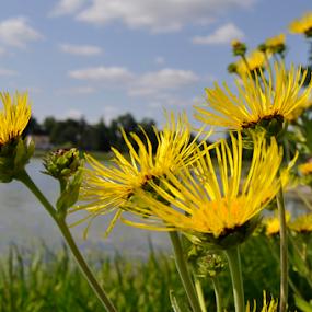 by Stefan Pettersson - Flowers Flowers in the Wild