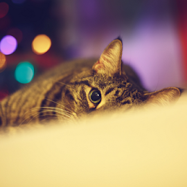 Miranda by Leah Varney - Animals - Cats Portraits